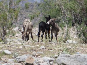 Outdoors Burros