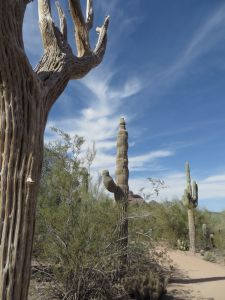 Outdoors, Desert Botanical