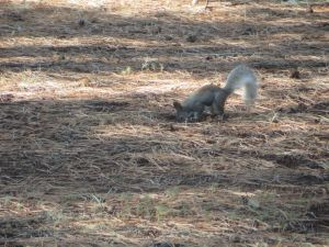 Outdoors Squirrel