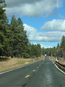 Roads woods near Flagstaff