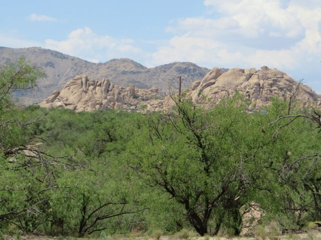 Mesquites in Texas Canyon