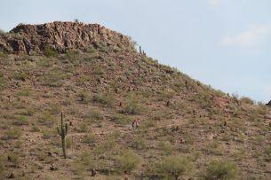 Desert volcanic hillside