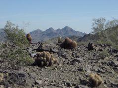 Desert vistas
