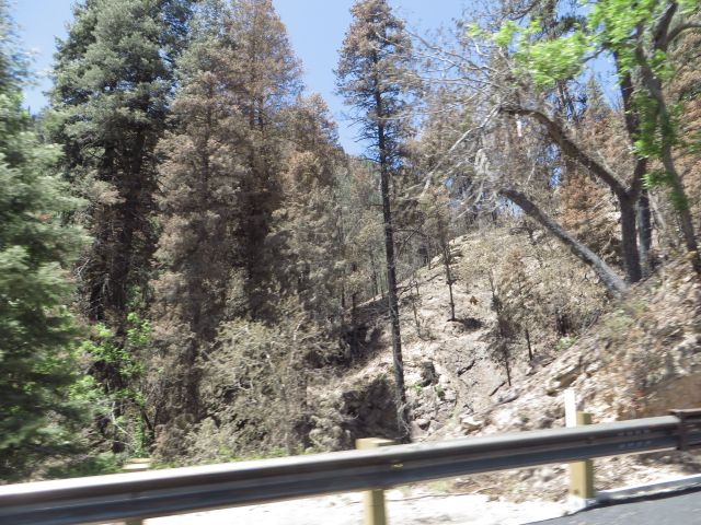 As you drive along the switchbacks out of the canyon, you pass some burned areas where fire was stopped right at the road.