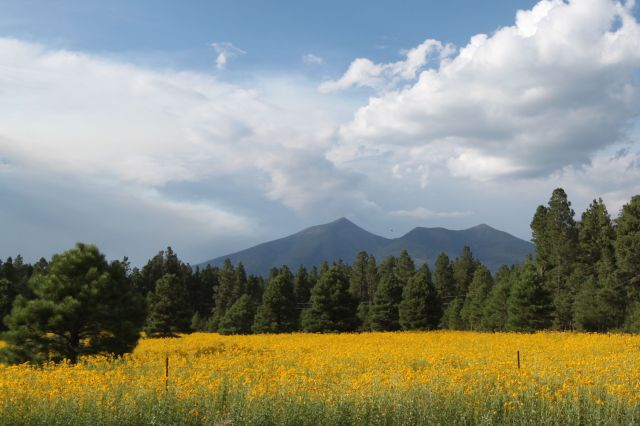 The Kachina Trail runs along the southern side of the San Francisco Peaks, shown here, at the 9800 foot line. The highest Peak is Humphrey's Peak at 12, 633 feet. (3851 m) This is the highest point in Arizona.