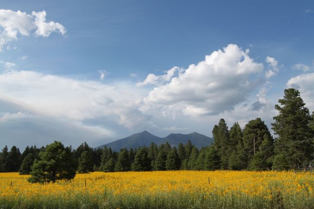 San Francisco Peaks on a sunny day.