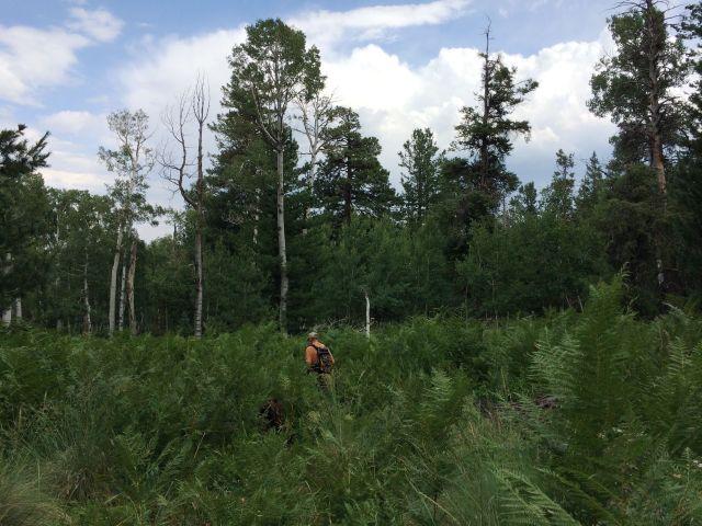 Hiker lost in ferns