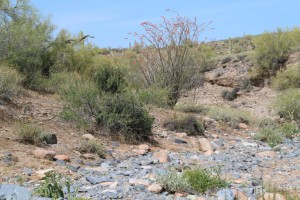 Cave Creek area desert wash