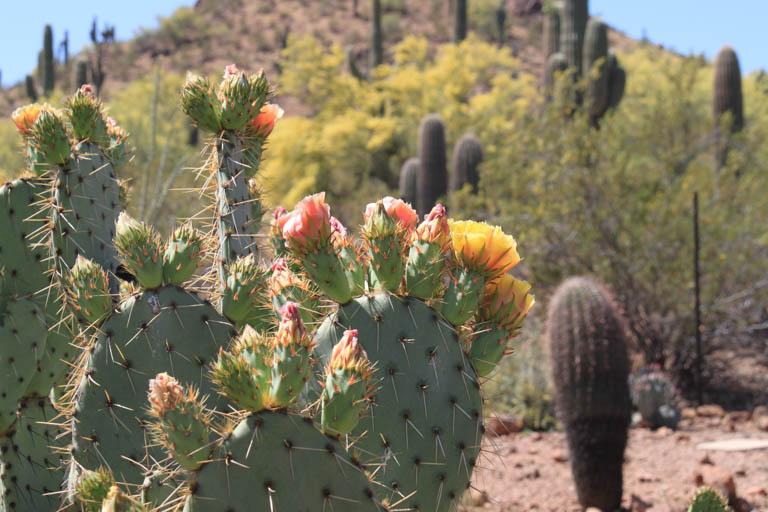 Garden Flowers Botanical Desert