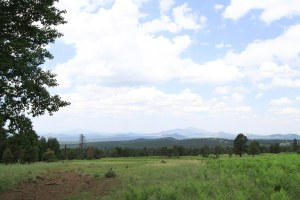 The first view of the meadow and the distant cinder cones of the San Francisco Volcanic Field.