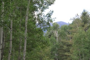 The San Francisco Peaks as seen from the shoulder of the mountain.